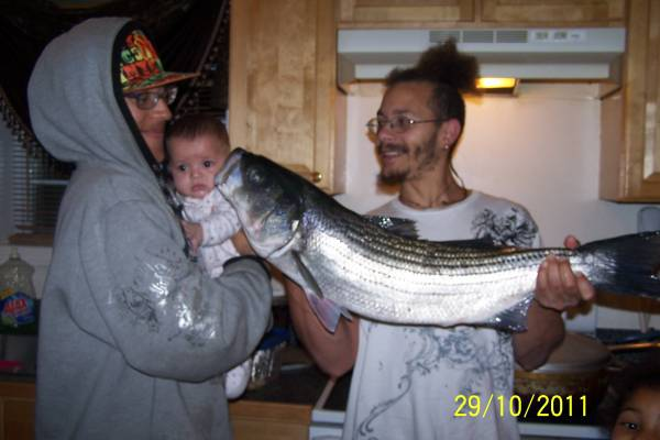 striped bass, taug