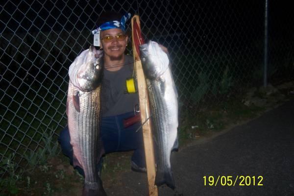 striped bass, taug