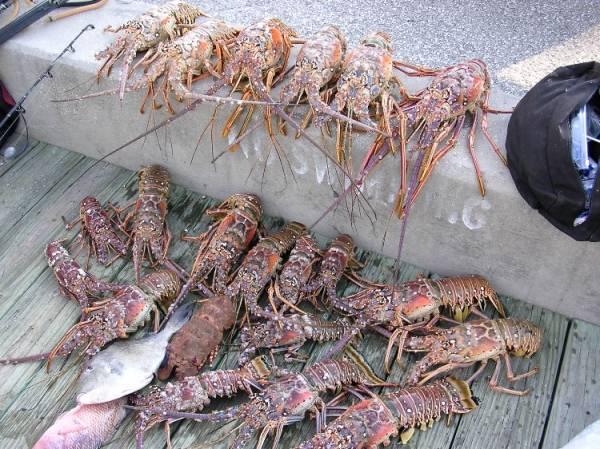 lobster_take_ponce