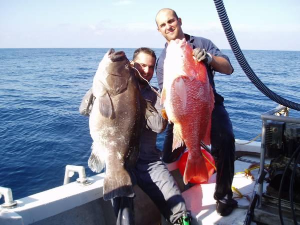 62 lb warsaw, 30 lb snapper