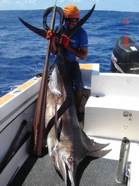 98 kgs striped marlin