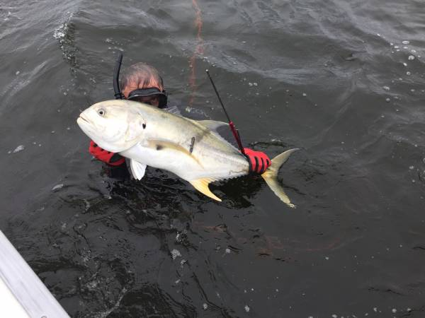 Pole spear Jack Crevalle