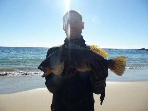 Sand Bass backnthaday Laguna