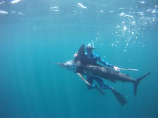 marlin_underwater