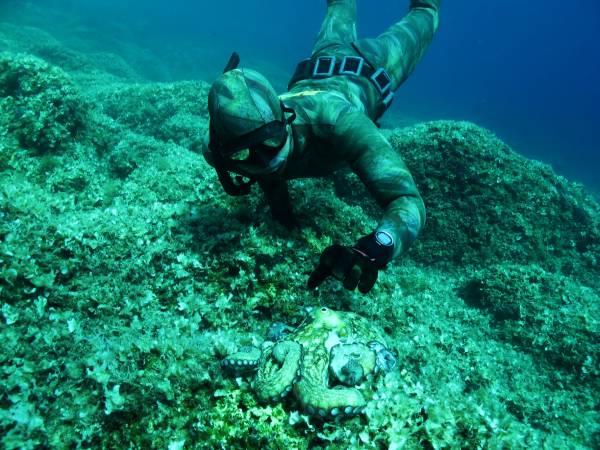 Tako in the Adriatic Sea